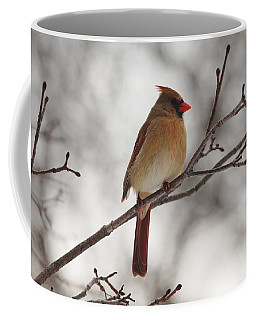 Perched Female Red Cardinal Coffee Mug