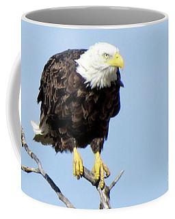 Perched On A Tree Coffee Mug