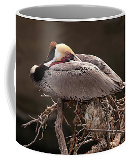 Coffee Mug featuring the photograph Perched Pelican by Howard Bagley