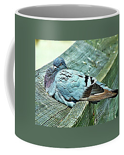 Perched Rock Dove Coffee Mug