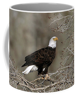 Coffee Mug featuring the photograph Perched by Ronnie and Frances Howard