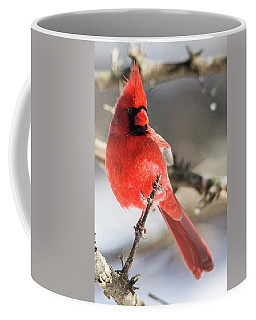 Perching Mister Cardinal Coffee Mug