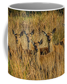 Pere David's Deer Group Coffee Mug