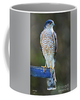 Sharp-shinned Hawk Coffee Mug