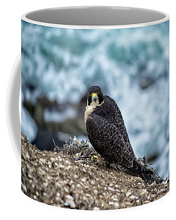 Peregrine Falcon - Here's Looking At You Coffee Mug