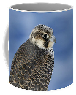 Peregrine Falcon Juvenile Close Up Coffee Mug