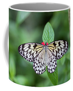 Coffee Mug featuring the photograph Perfect Butterfly Pose by Raphael Lopez