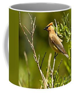 Perfectly Perched Coffee Mug