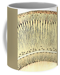 Pes Hipocampi Major Santiago Ramon Y Cajal Coffee Mug