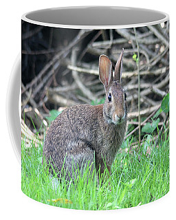 Coffee Mug featuring the photograph Peter Rabbit by Trina Ansel