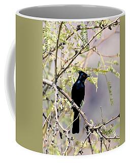Phainopepla Black Cardinal Coffee Mug