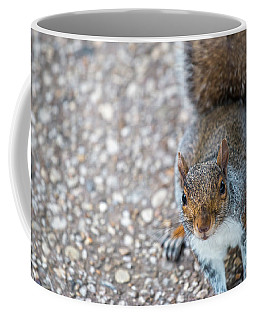Photo Of Squirel Looking Up From The Ground Coffee Mug