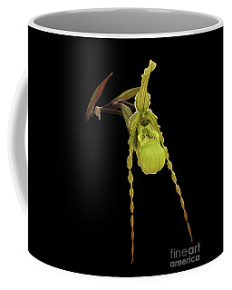 Phragmipedium Richteri Orchid Coffee Mug