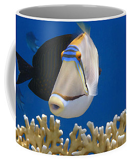 Picasso Fish And Klunzingerwrasse Coffee Mug
