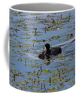 Pied Billed Grebe Lake John Swa Co Coffee Mug