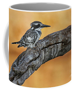 Coffee Mug featuring the photograph Pied Kingfisher Perched by Myrna Bradshaw