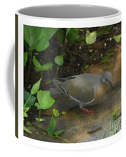 Coffee Mug featuring the photograph Pigeon by Felipe Adan Lerma