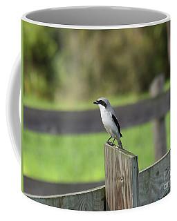 Pigeon-toed Shrike Coffee Mug