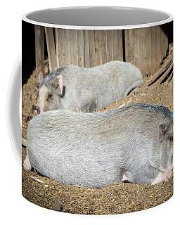Coffee Mug featuring the photograph Piggies by Cheryl McClure