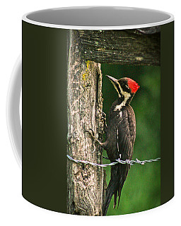 Coffee Mug featuring the photograph Pileated Woodpecker by Jessica Brawley