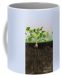 Pilewort Or Lesser Celandine Ranunculus Ficaria - Root System -  Coffee Mug