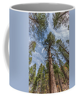 Pine Cathedral On The West Fork Coffee Mug