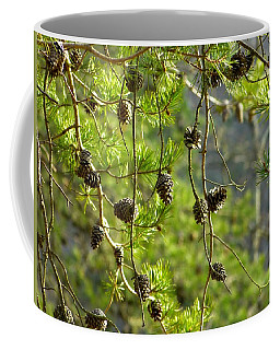 Coffee Mug featuring the photograph Pine Cones At The Reservoir by Donald C Morgan