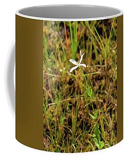 Pine Lands Endangered Plant Coffee Mug