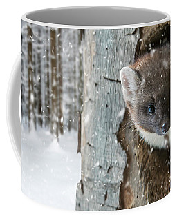 Pine Marten In Tree In Winter Coffee Mug