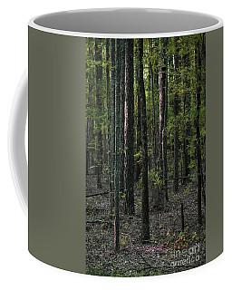 Coffee Mug featuring the photograph Pine Wood Sunrise by Skip Willits