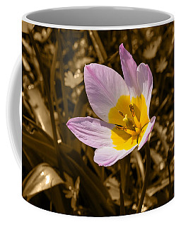 Pink And Yellow Tulip On Sepia Background Coffee Mug