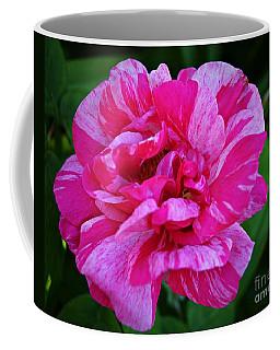 Pink Candy Stripe Rose Coffee Mug