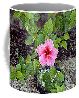 Pink Hibiscus And Wheel Coffee Mug