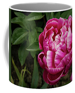 Coffee Mug featuring the photograph Pink Peony by Jean Noren