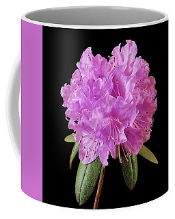 Coffee Mug featuring the photograph Pink Rhododendron  by Jim Hughes