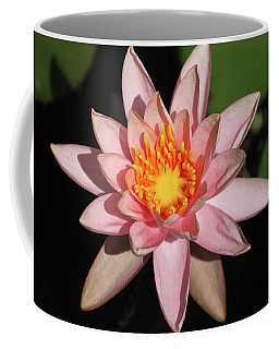 Pink Water Lily 2016 Coffee Mug by Suzanne Gaff