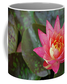 Coffee Mug featuring the photograph Pink Water Lily Beauty by Amee Cave
