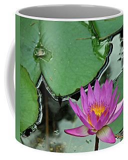 Coffee Mug featuring the photograph Pink Water Lily by Judy Vincent