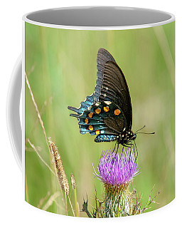 Pipevine Swallowtail Butterfly 2 Coffee Mug
