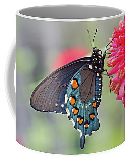Pipevine Swallowtail Butterfly Coffee Mug