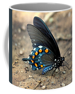Pipevine Swallowtail Close-up Coffee Mug