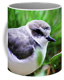 Coffee Mug featuring the photograph Piping Plover by Anthony Jones