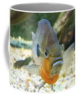 Piranha Behind Glass Coffee Mug