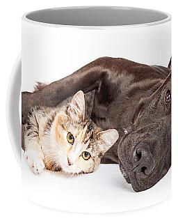 Pit Bull Dog And Kitten Cuddling Coffee Mug