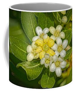 Pittosporum Flowers Coffee Mug