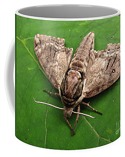 Plebeian Sphinx Moth Coffee Mug