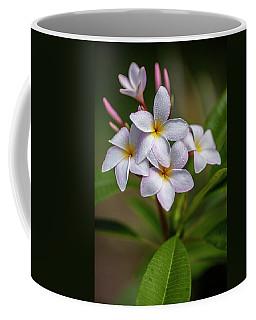 Plumeria 3 Coffee Mug