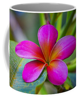 Plumeria On Leaf Coffee Mug