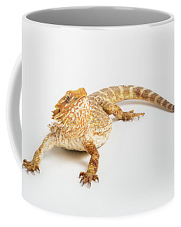 Pogona Isolated Coffee Mug