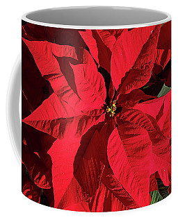Poinsettia Study 1 Coffee Mug